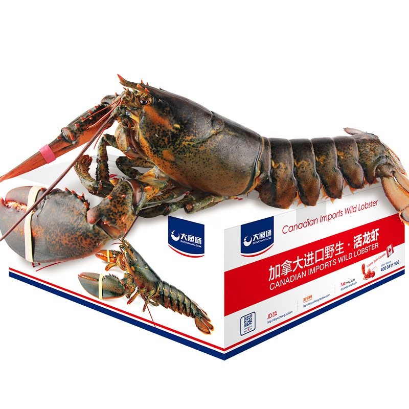 Canadian Lobster